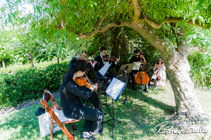 string quartet wedding summer outdoors