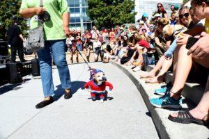 2017 merrifield fall festival pet costume contest mosaic