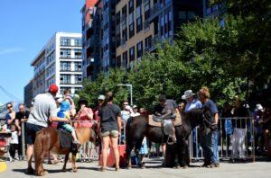 merrifield fall festival 2017 mosaic pony ride